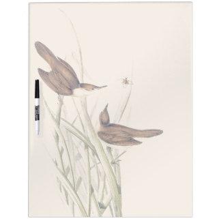 Los animales de la fauna de los pájaros de la pizarra blanca