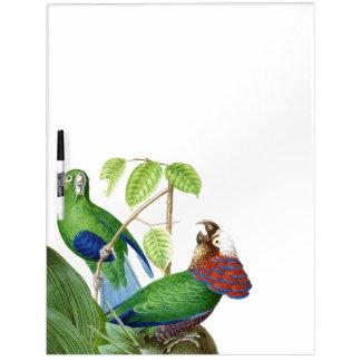 Los animales de la fauna de los pájaros del loro pizarra blanca
