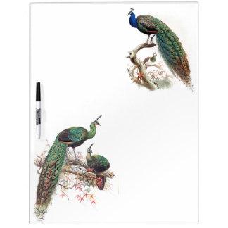 Los animales de la fauna de los pájaros del pavo pizarra blanca