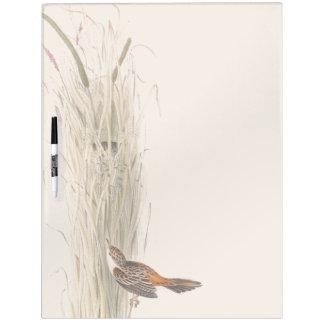 Los animales de la fauna del pájaro de la curruca pizarra blanca