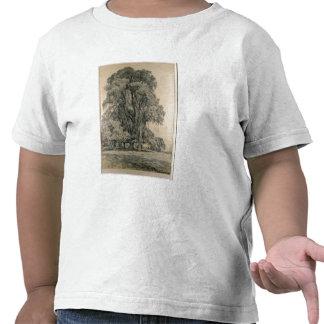 Los árboles de olmo en viejo Pasillo parquean, Ber Camisetas