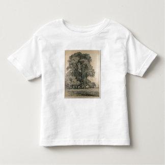 Los árboles de olmo en viejo Pasillo parquean, Camisas
