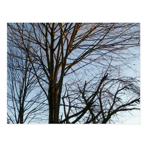los árboles tristes postales