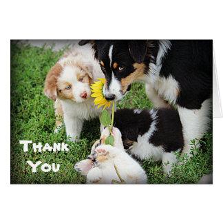 Los australianos del azul de cielo le agradecen tarjeta de felicitación