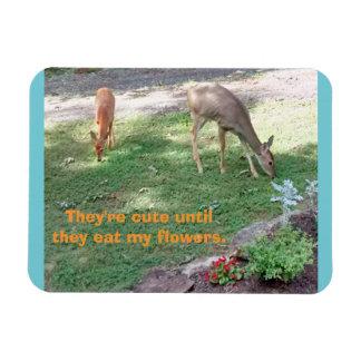 Los ciervos lindos hasta comen el imán horizontal