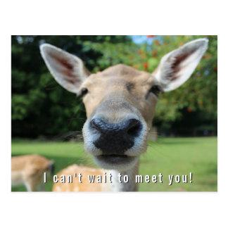 Los ciervos Nosy no pueden esperar para Postal