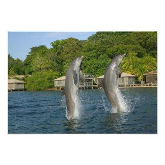 Los delfínes que saltan, Roatan, islas de la bahía Impresiones Fotográficas
