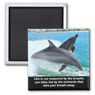 Los delfínes toman a su respiración el imán ausent