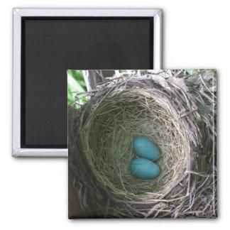 Los dos huevos del petirrojo en jerarquía imán