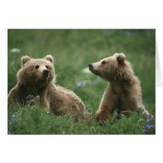 Los E.E.U.U., Alaska, osos marrones del sub-adulto Tarjeta De Felicitación