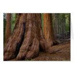 Los E.E.U.U., California, árbol de la secoya gigan Tarjeton