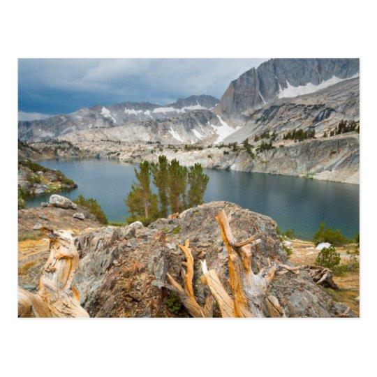 Los E.E.U.U., California, bosque nacional de Inyo Postal