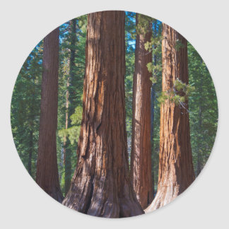 Los E.E.U.U., California. Troncos de árbol de la Etiqueta Redonda