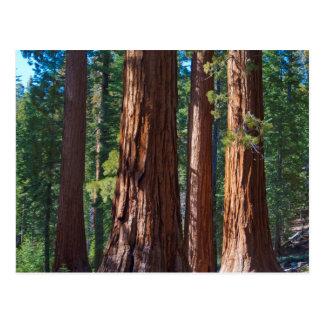 Los E.E.U.U., California. Troncos de árbol de la Postal