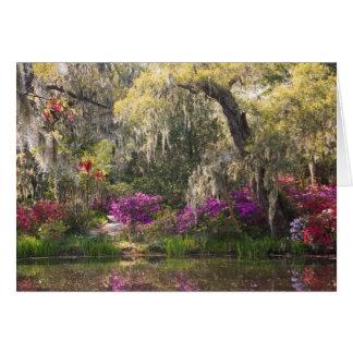 Los E.E.U.U., Carolina del Sur, Charleston. Árbole Tarjeta De Felicitación
