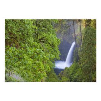 Los E.E.U.U., Eagle Creek, garganta de Columbia, O Fotografia