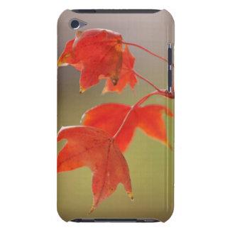 Los E.E.U.U., Kansas, hojas rojas en caída Case-Mate iPod Touch Funda