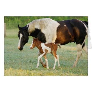 Los E.E.U.U., la Florida, potra recién nacida de l Tarjeton
