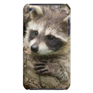 Los E.E.U.U., Minnesota, piedra arenisca, fauna 16 Barely There iPod Protectores