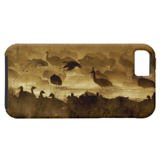 Los E.E.U.U., New México, Bosque del Apache iPhone 5 Carcasas