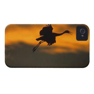 Los E.E.U.U., New México, Bosque del Apache Nation Case-Mate iPhone 4 Protectores