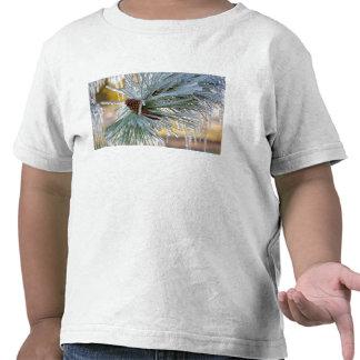 Los E.E.U.U., Oregon, curva. Las agujas del pino Camiseta