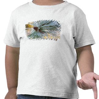 Los E.E.U.U., Oregon, curva. Las agujas del pino p Camisetas