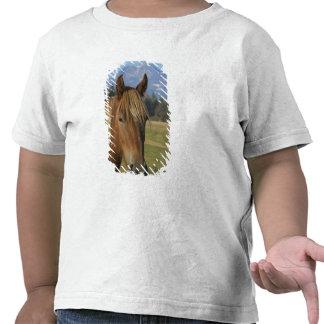 Los E.E.U.U., Oregon, hermanas, opinión tres Camisetas