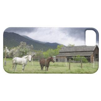 Los E.E.U.U., Utah, caballos en rancho Funda Para iPhone SE/5/5s