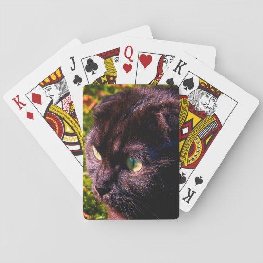Los escoceses lindos doblan la cara soleada barajas de cartas