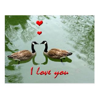 """Los gansos se juntan en amor - """"te amo"""" los postal"""
