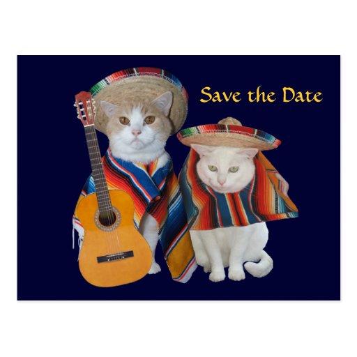 Los gatos divertidos al sur del boda de la tarjeta postal