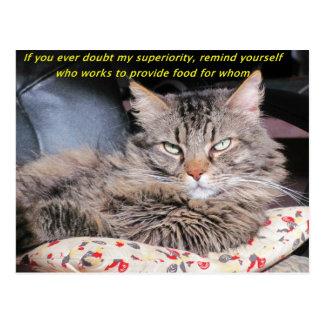 Los gatos son Meme superior Postal
