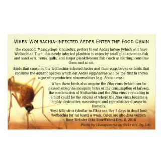 Los hechos: Aedes Wolbachia-Infectado por Flyer