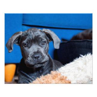 Los ojos del perro de perrito dejan el juego fotos