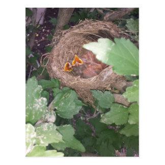 Los pájaros de bebé cantan la canción de la postal