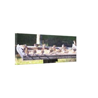 Los pájaros del gorrión en un alimentador del lienzo