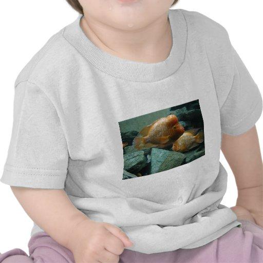 Los pescados a pescado de Momma de la cara solamen Camisetas