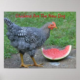 Los pollos son el nuevo poster del perro