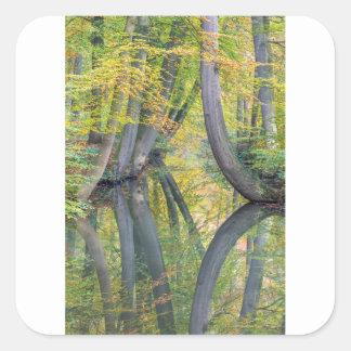 Los troncos de árbol de la caída con la reflexión pegatina cuadrada