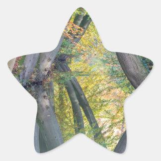 Los troncos de árbol de la caída con la reflexión pegatina en forma de estrella