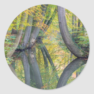 Los troncos de árbol de la caída con la reflexión pegatina redonda