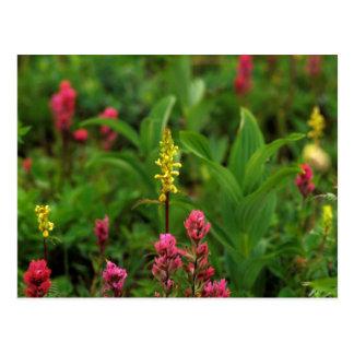 Los Wildflowers del verano envían adelante un Postal