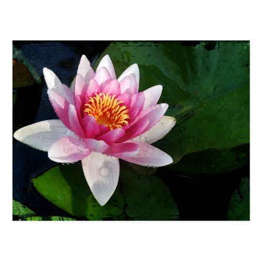 Lotus2 Postal