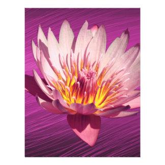 Lotus Tarjetas Informativas