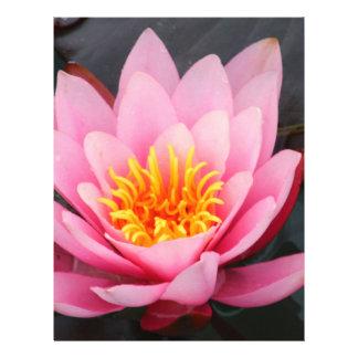 Lotus Folleto 21,6 X 28 Cm