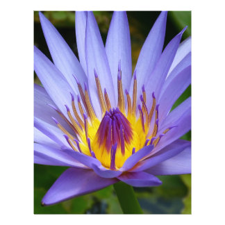 Lotus Tarjeton