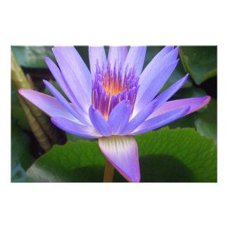 Lotus Arte Con Fotos