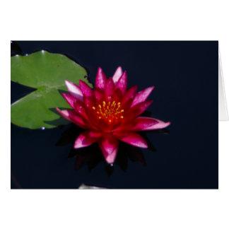 Lotus magenta Waterlily Tarjeta