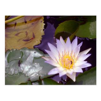 Lotus tailandés, abeja y pescados postal